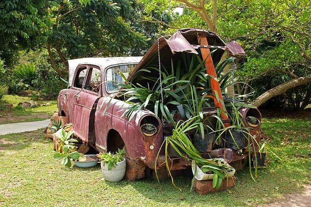 rostliny pod kapotou