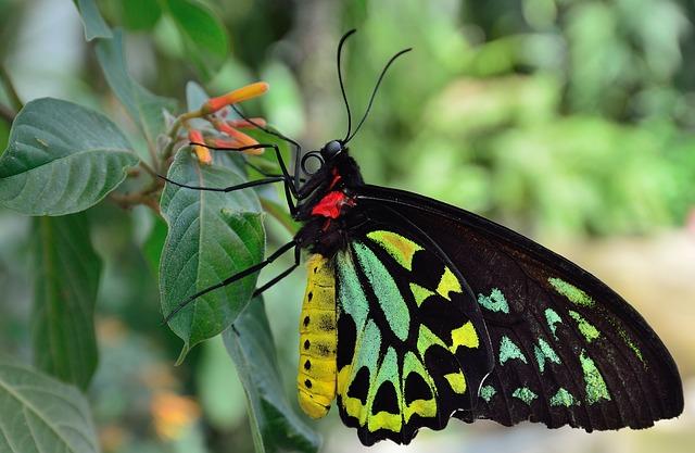 Pestrobarevný motýl